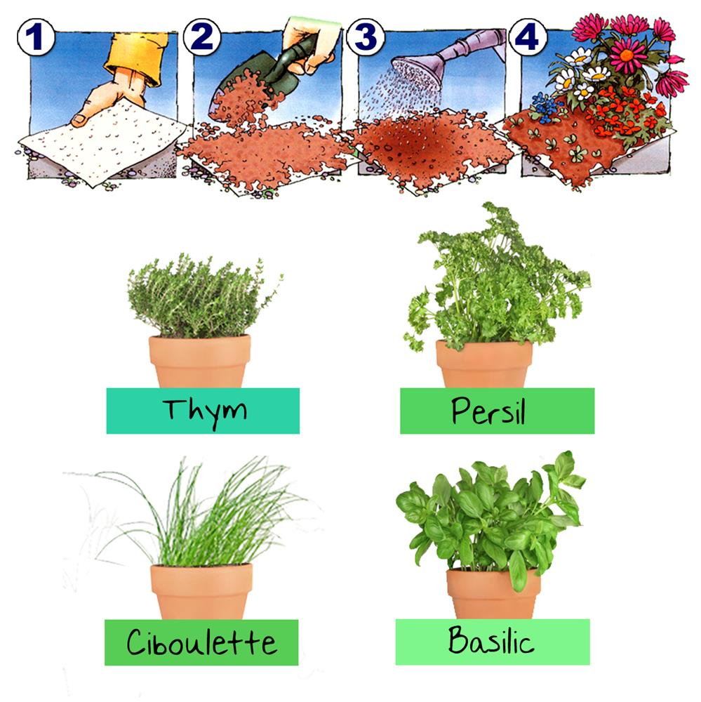 Tapis de graines herbes aromatiques tom press - Herbes aromatiques cuisine liste ...