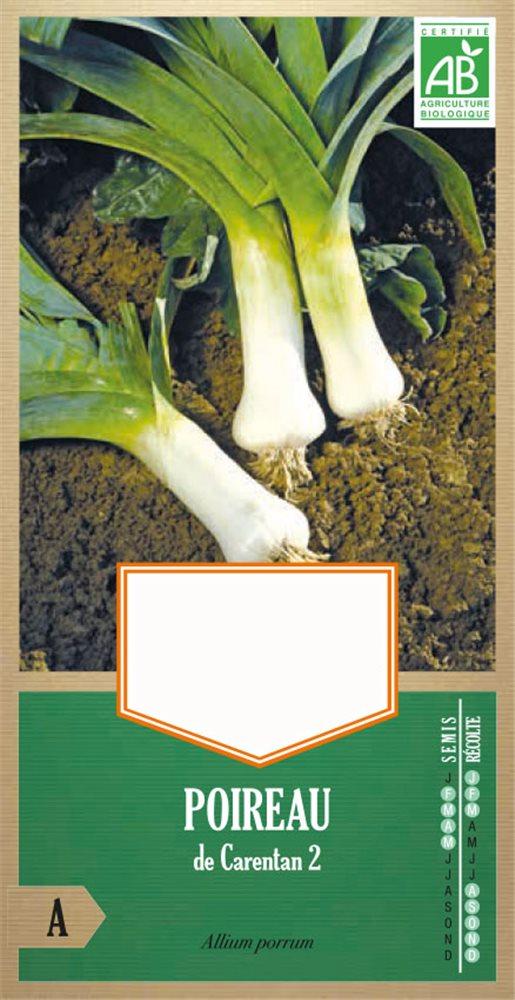 amaryllis carentan