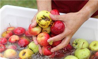 Laver les pommes